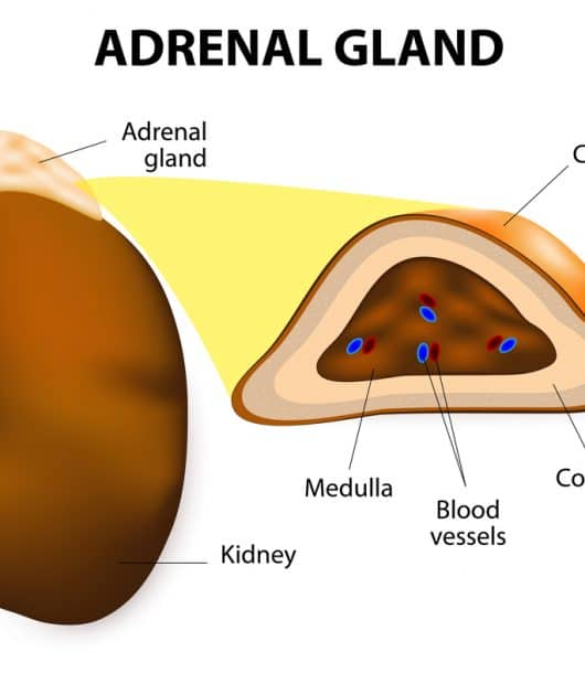 heal adrenal fatigue