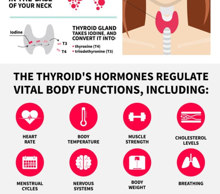 Thyroid gland: metabolism, terms and functions - Sandra Bloom